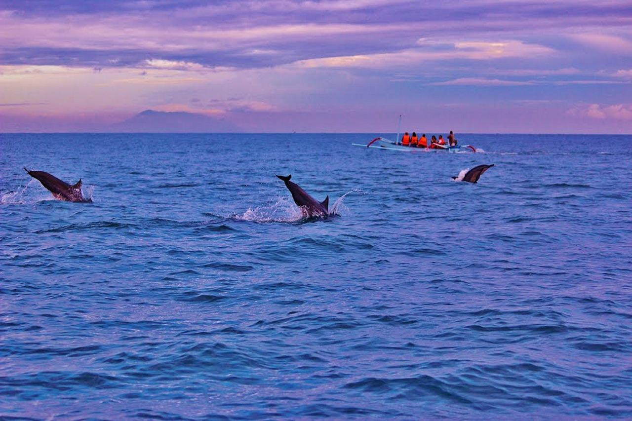 Картинки по запросу Встреча рассвета в море с дельфинами ловина