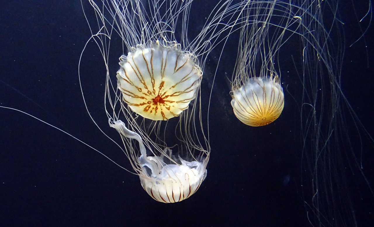 jellyfish-1024271_1280
