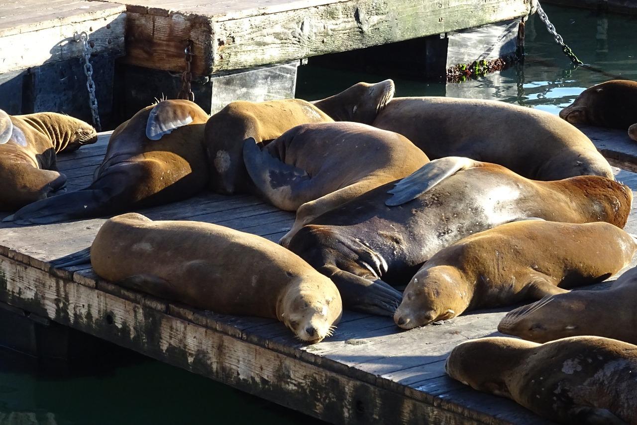 sea-lion-1053350_1280