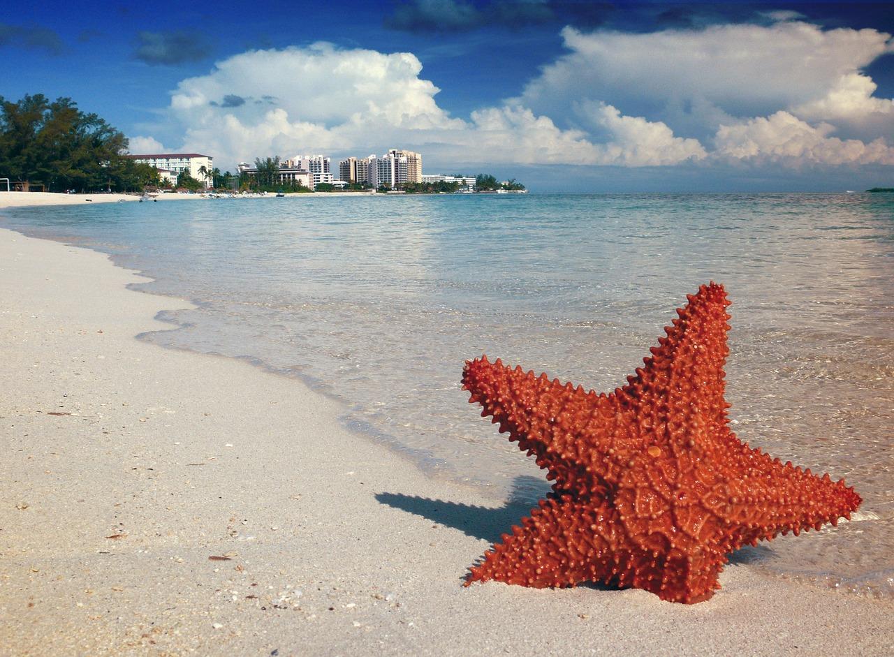 starfish-1122849_1280