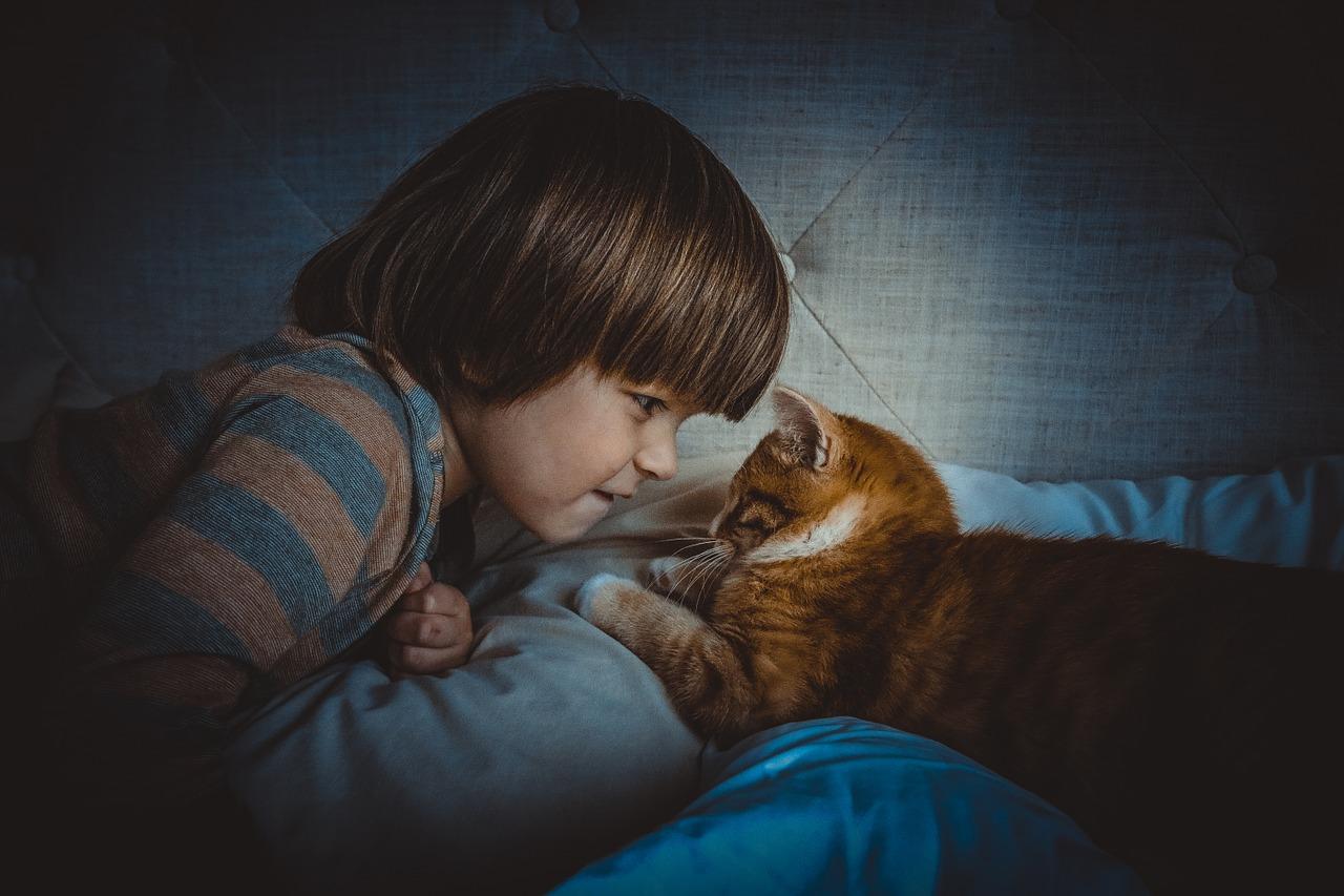 cat-1045180_1280