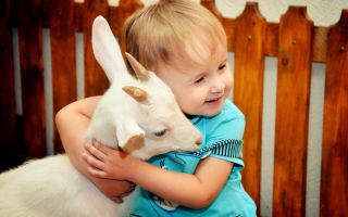 В гости к животным: Пенза
