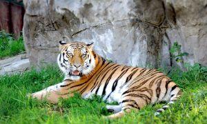 Зоопарк в Москве – готовимся к посещению с детьми